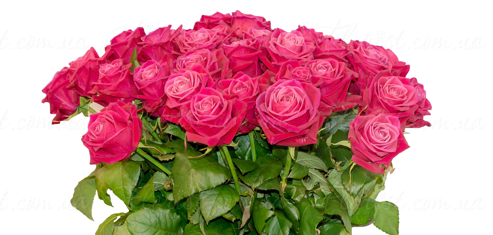 Send bouquet of 19 25 or 29 pink roses of 70 80 cm length wrapped pink roses symbolize care and tenderness send bouquet of pink roses for a birthday anniversary or just because without any reason because you want to izmirmasajfo