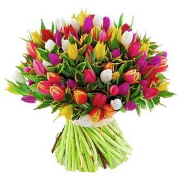Mixed tulips - view more