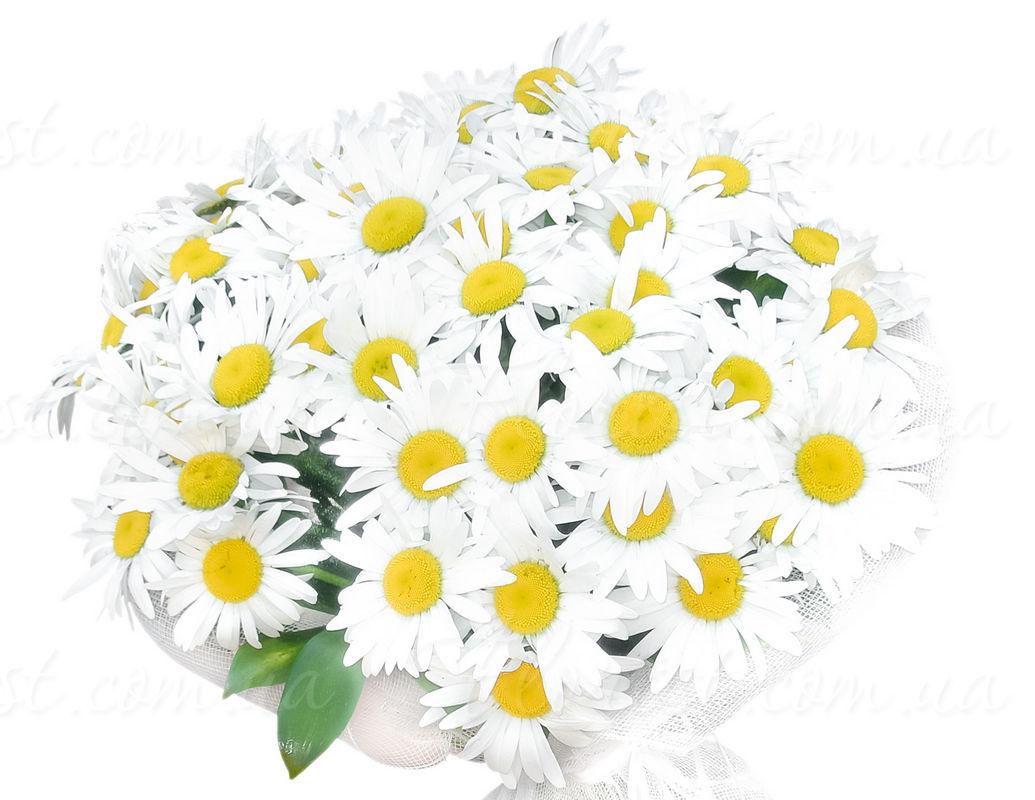Цветы стоимость ромашки