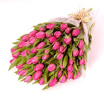 Pink tulips - view more