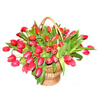 Basket of red tulips Bright Spring