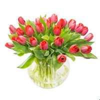 Bouquet of tulips Mature Beauty