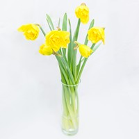 Bouquet Сheerful Daffodils - view more