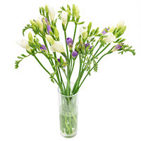 Arrangement of fresias Gentle Glance - view more