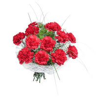 Bouquet of red carnations Salute