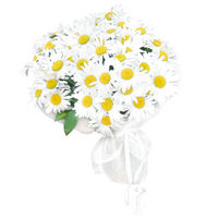 Bouquet Glade Of Camomiles - view more