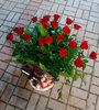 Фото 3. Доставка композиции в корзинке из роз, с вином, конфетами и киндер-сюрпризами в Анталию, Турция. florist.com.ua