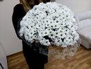 Фото 1. Доставка букета белых кустовых хризантем по Киеву, Украина. florist.com.ua